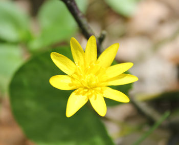 Heimische Pflanzen heimische pflanzen archive naturakademie im saarland